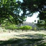 Lehmann's orchard