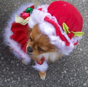 Dog as Mrs. Santa