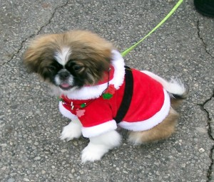 The Littlest Santa of them All