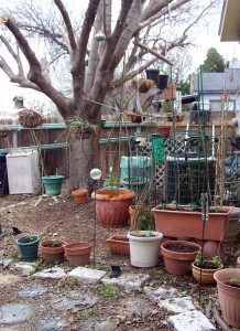 Embryonic Garden - Vast Collection of Pots