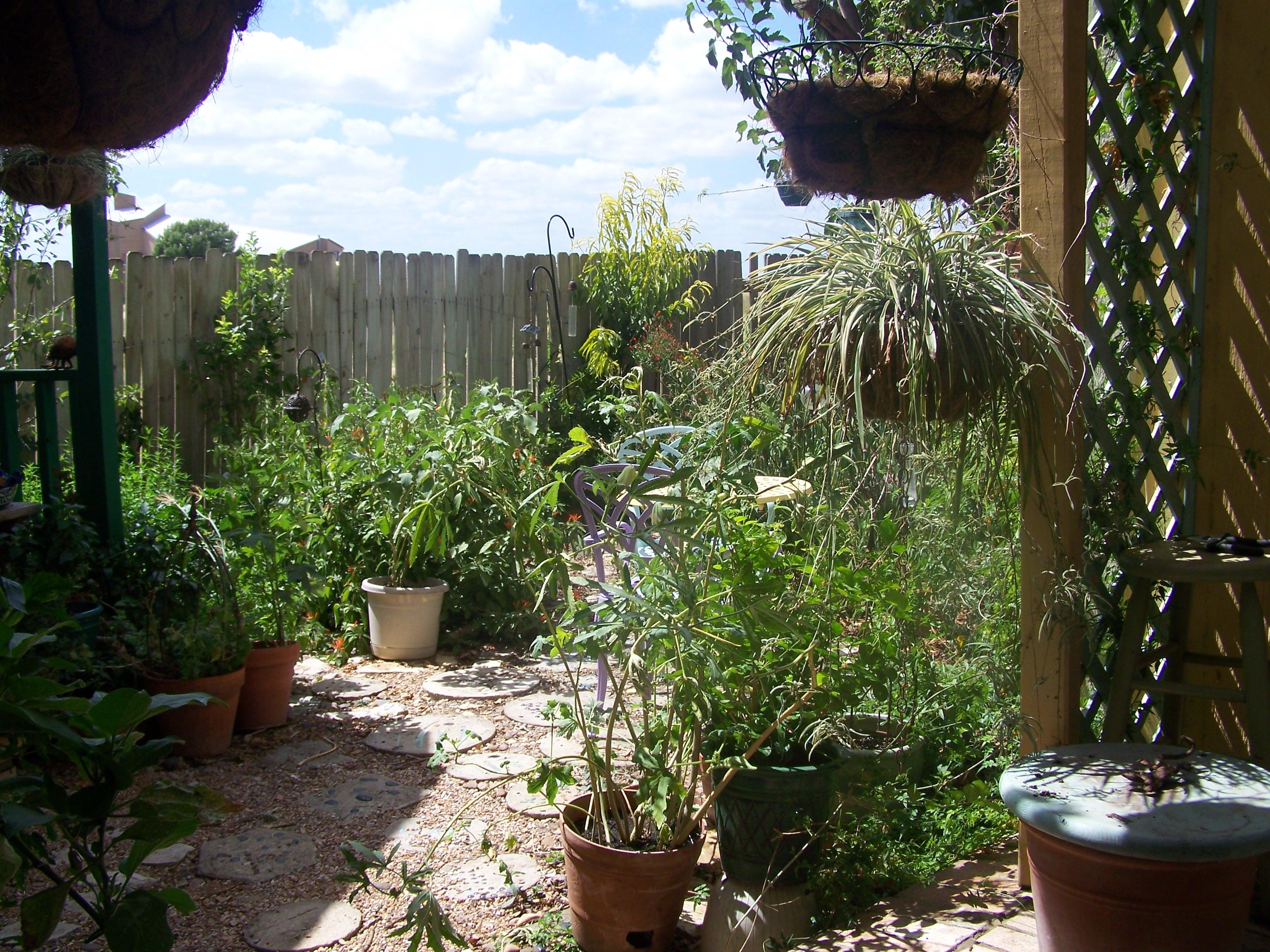 Wartime Kitchen Garden Dvd September 2014 Celia Hayes The Accidental Texan