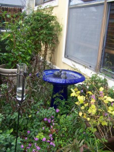 The little ducks - in the birdbath